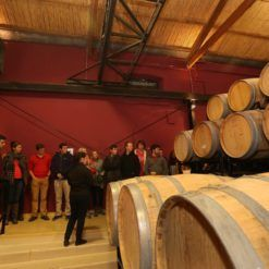 Guided visit in a winery