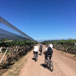 Excursión en bicicleta por los viñedos