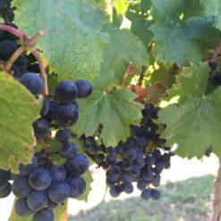 wine tasting sommelier