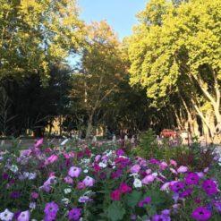 City tour Mendoza