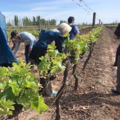 mejores viñedos en Mendoza