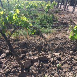 best vineyards in mendoza