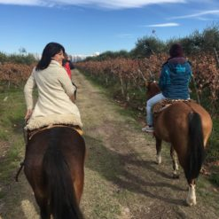 Horseback riding in Rancho Viejo - Pre Mountain Range